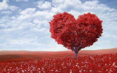 Training Keuzes maken vanuit je hart